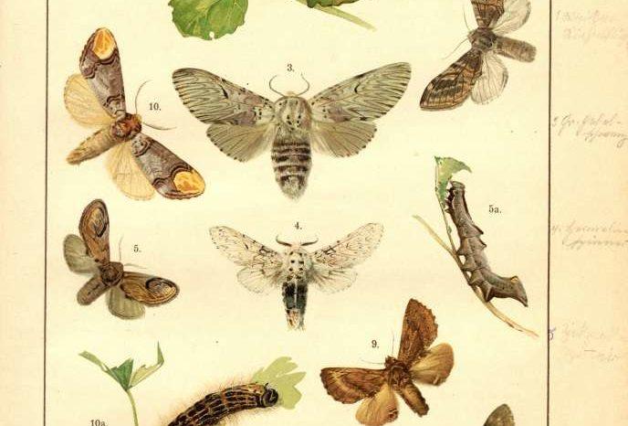 Tous chenilles ? Tous papillons ?
